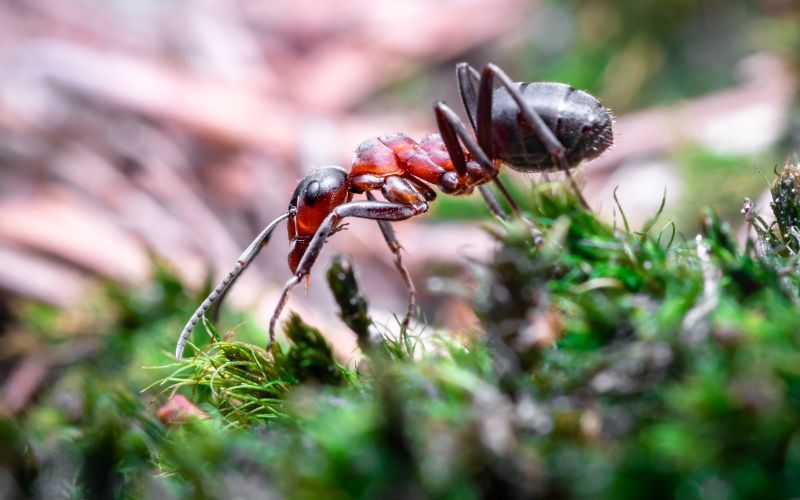 best ant killers