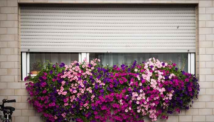 best fertilizer for geraniums plant