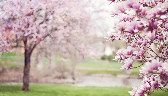 fertilizer for magnolias