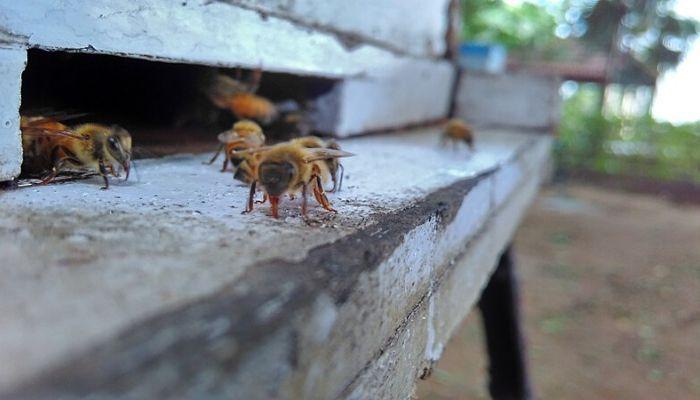 italian bee