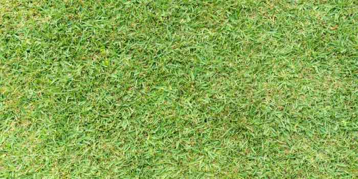 Fertilizer-for-St-Augustine-grass