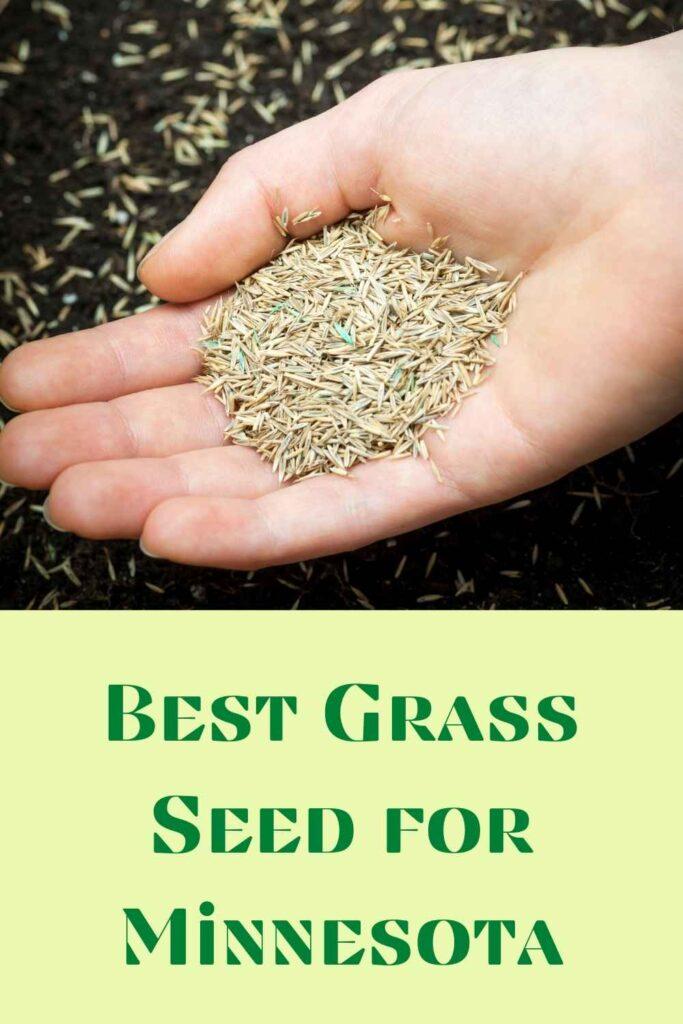 Grass Seed for Minnesota