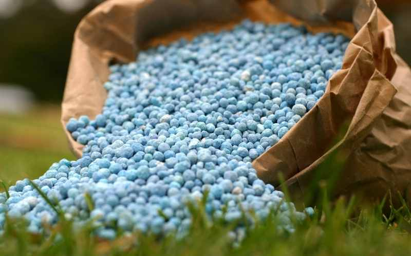 fertilizer for pasture