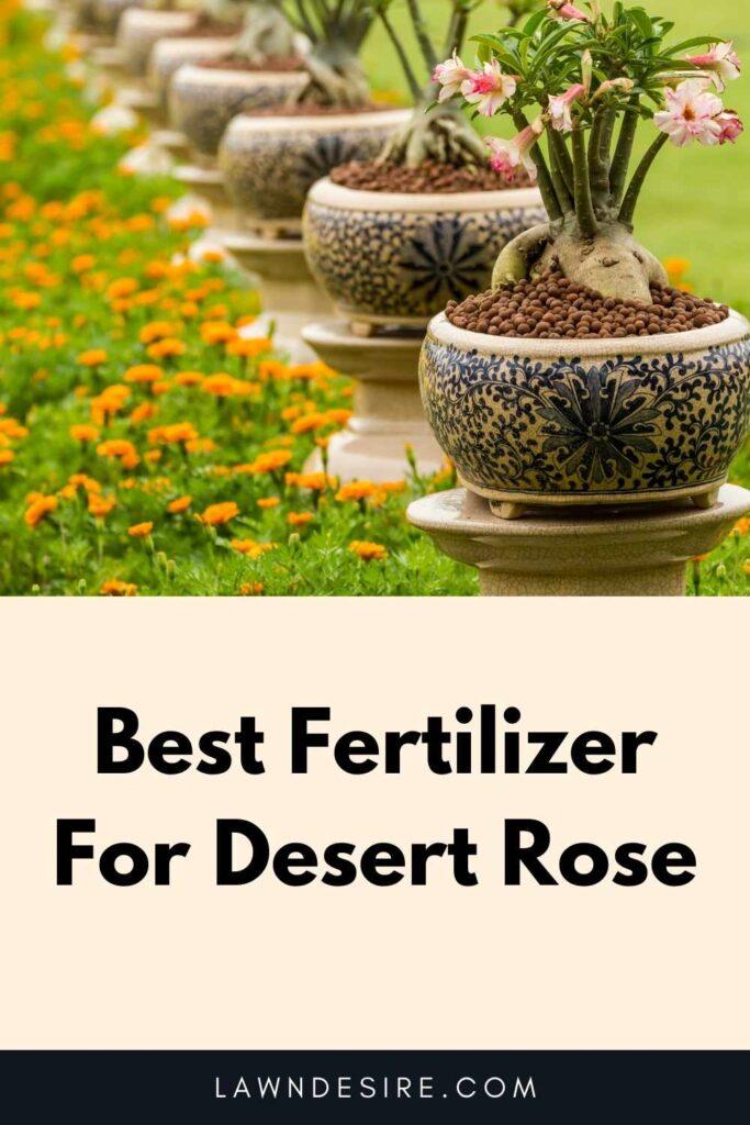 Fertilizer For Desert Rose