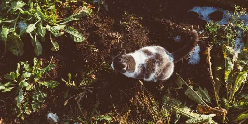 cat-poop