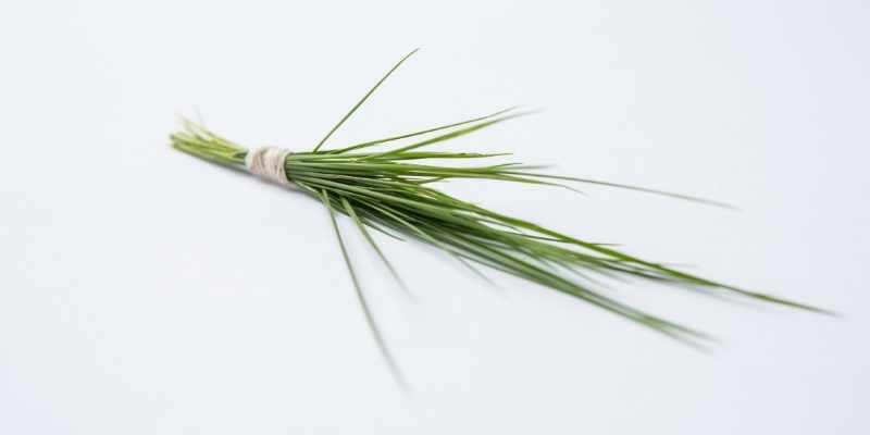 Durva-Grass